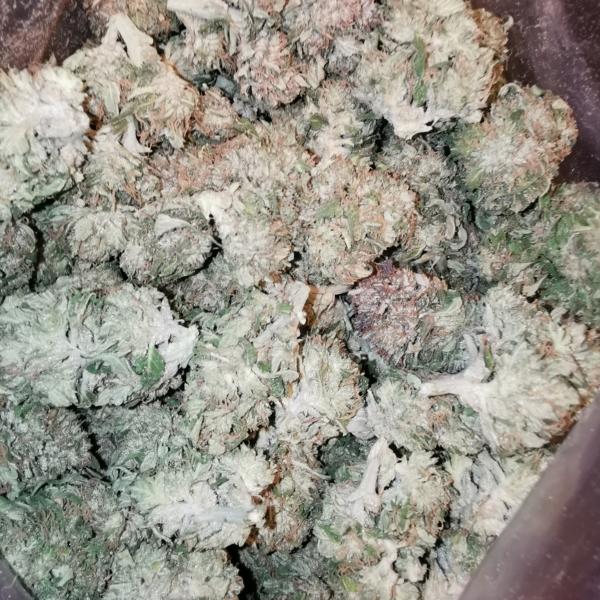 Blueberry Kush / Greenhouse /Wholesale